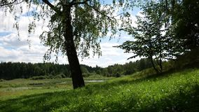 Forest by the lake. Large glade.  stock footage