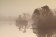 Forest lake at misty sunrise Stock Photos