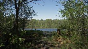 Forest Lake Mooi meer in de bosbezinningen over het Naaldbos op een Wildernismeer Mooi stock footage