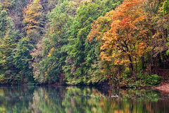 Forest lake morning in autumn Stock Photos