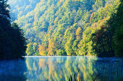 Forest lake morning in autumn Royalty Free Stock Photos