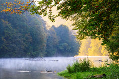 Forest lake morning in autumn Royalty Free Stock Photography