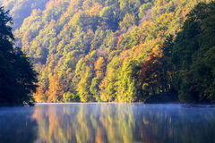 Forest lake morning in autumn Royalty Free Stock Image