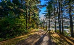 Forest Lake na queda Fotos de Stock