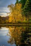 Forest Lake na queda Foto de Stock