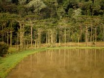 Forest Lake Nature Brazil Royaltyfria Foton