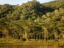 Forest Lake Nature Brazil Arkivfoton