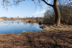 Forest Lake on Nice Sunny Day with Blue Sky Royalty Free Stock Photos