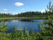 Forest Lake op een zonnige dag Stock Afbeeldingen