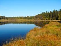 Forest Lake på soluppgångmorgonen Gräs och träd reflekterade i tyst vatten blå sky Royaltyfri Fotografi