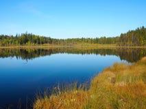 Forest Lake på soluppgångmorgonen Gräs och träd reflekterade i tyst vatten blå sky Royaltyfria Bilder