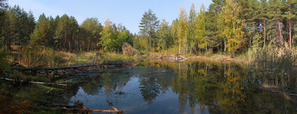 Forest Lake Panorama in the yellow autumn forest. Panorama bright forest lake among the trees begin to turn yellow Stock Photo