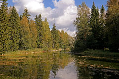 Forest Lake. In a park in Gatchina Stock Photo