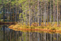 Forest at the lake Stock Images