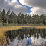 Forest lake with pines in HDR Royalty Free Stock Images