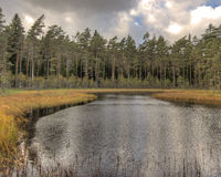 Forest lake with pines in HDR Stock Photo