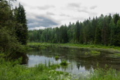 Forest, lake, pond, Stock Photography