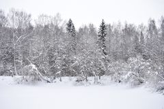 In the forest, the lake pond is covered with ice and snow trees decorate the shore towering over the water. Mountain lake royalty free stock image