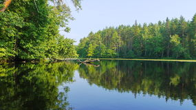 Forest lake Royalty Free Stock Image
