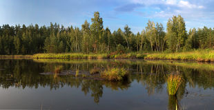 Forest Lake After Rain Royalty Free Stock Image
