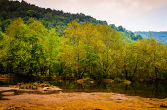 Forest Lake In A Rainy Day. Forest near a lake in a rainy day. Tesvikiye village next to Cinarcik town which is a district of Yalova city that is two hours away Stock Photos