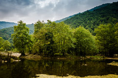 Forest Lake In A Rainy Day Royalty Free Stock Photos