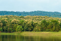 Forest lake reflecting trees in Thailand Stock Photo