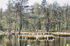 Forest Lake Reflection photo stock