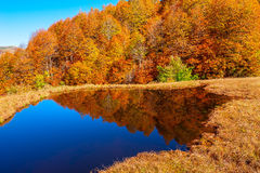Forest by the lake Royalty Free Stock Photo