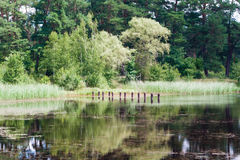Forest Lake. Forest, lake, reflection of trees in the water Royalty Free Stock Photo
