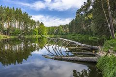 Forest lake with reflection in water. Summer place with arbor for fishing and relax Stock Photo