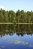 Forest Lake Reflections. Reflection of forest on the calm lake Sorvasto in Salo, Finland Stock Image