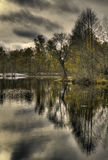 Forest lake with reflections. Trees reflecting in a forest lake royalty free stock photography