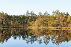 Forest lake Stock Photography