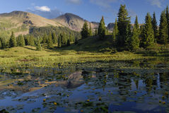Forest lake in Rocky Mountains Stock Images
