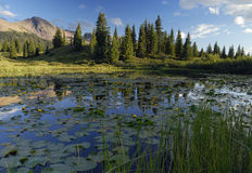 Forest lake in Rocky Mountains Royalty Free Stock Photography