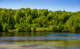 Forest on the lake shore. Lovely nature scenery on a bright springtime day Stock Photography