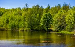 Forest on the lake shore. Lovely nature scenery on a bright springtime day Royalty Free Stock Images