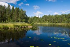 Forest lake side Royalty Free Stock Photos