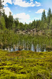 Forest Lake stock image