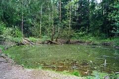 Forest Lake. A small wetland lake in the forest Stock Photography