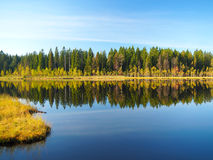 Forest Lake am Sonnenaufgangmorgen Gras und Bäume reflektiert im ruhigen Wasser Blauer Himmel Früher Herbst Stockbild