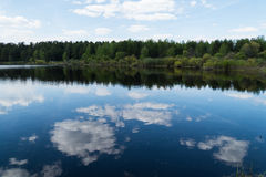 Forest lake in the spring. 2016 stock image