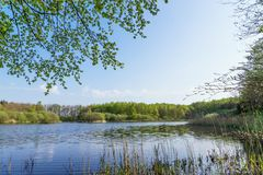Forest lake in spring Stock Photos