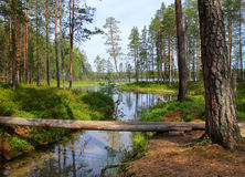 Forest lake and streamlet. Forest lake and clear water streamlet in Finnish wilderness royalty free stock photo