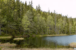 Forest Lake in Summer Royalty Free Stock Photos