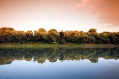 Forest lake in summer Stock Images