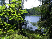 Forest lake in the summer. Green grass, trees and blue lake in the summer royalty free stock photography