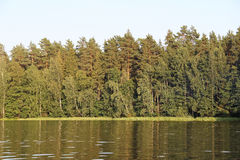 Forest lake in summer in Central Russia. Stock Photos