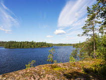 Forest lake in summer Royalty Free Stock Image